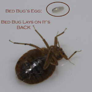 bed bug companies in indianapolis