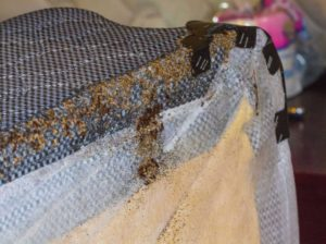 best bed bug treatment indianapolis